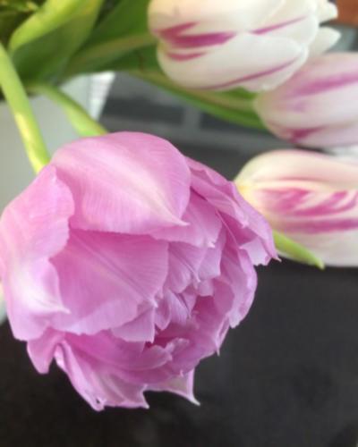 tulppaani kerrattu laventeli